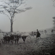 Cattle_men__card