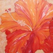 Hibiscus_red_card