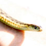 Snake_skin-2_copy_card