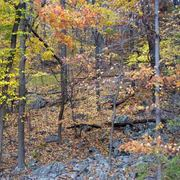 Fall_colors-2_copy_card