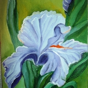 Iris_nov_card