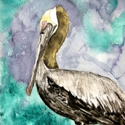Pelican_bird_small_card