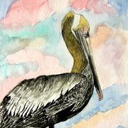 Pelican_bird_2_medium_card