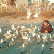 Feeding_the_seagulls_at_wrightsville_beach_card