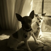 Paco_and_zena_sepia_card