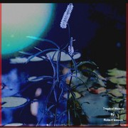 Ehanced_waterflower_in_lilly_pond_card