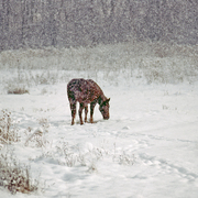Horse_in_snow_card