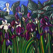 Iris-garden_card