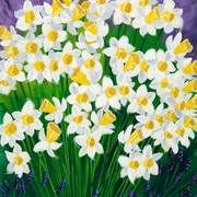 Daffodiles_card