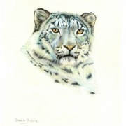 Pastel_snow_leopard__481_x_600__card