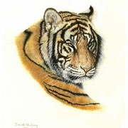 Pastel_tiger__481_x_600__card