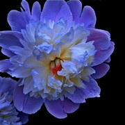 Glowing-flower-on-canvas-small_640__card