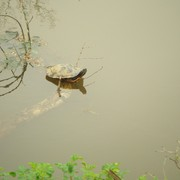 Turtle_home_card
