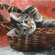 Cat_in_the_basket_card
