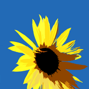 Sunflowerimg_3767_card