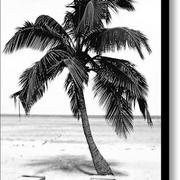 Palm-tree-in-black-and-white-glennis-siverson_card