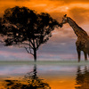 Giraffe-at-sunset_640__thumb