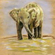 Baby_elephant_card