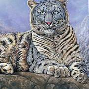 Snow-leopard-resting_card