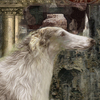 Column_of_the_time-_borzoi_thumb