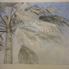 Mexican_fan_palm_tree_7