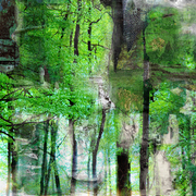 Fog_forest_trees_a_card