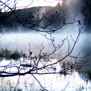 Scenery_branches_fog_may_long_2010_514_card