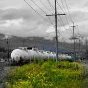 Train_and_yellow_flowers_scenery_may_033_card