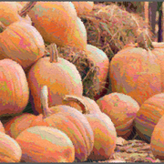 Pumpkins-02735_card
