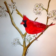 Red_cardinal_for_framing_card