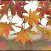 Fallleaves-2519_card
