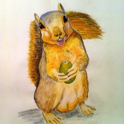 Squirrel_card