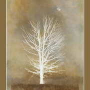 November_moon_card