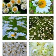 Sunday_drive_camp_day_with_mat_and_kim_2011_w2_daisy_flower_collage_card