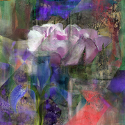 Rose_and_violet_ii_card
