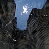 Buildings_behind_spider_web_thumb