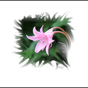 Flower_pink_lowres_card