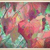 Fallcolors_thumb