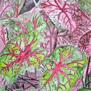 Caladiums_plant_painting_small_card