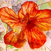 Hibiscus_2_small_flower_card