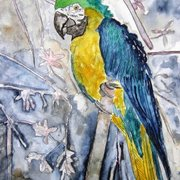 Parrot_bird_painting_small_card