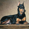 Doberman_oil_on_canvas_thumb