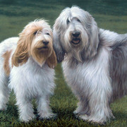 Grand_basset_griffon_vendeen_card