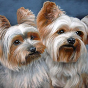 Yorkies_1_card