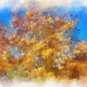 Fall_colors_card