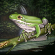 White-lipped-frog_card