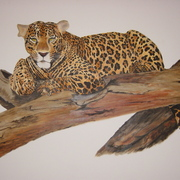 Leopard_in_tree_card
