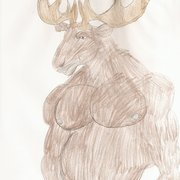 Moose_card