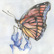 Butterfly_delete_card