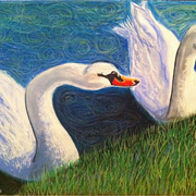 Swans__by_yael_burin_card